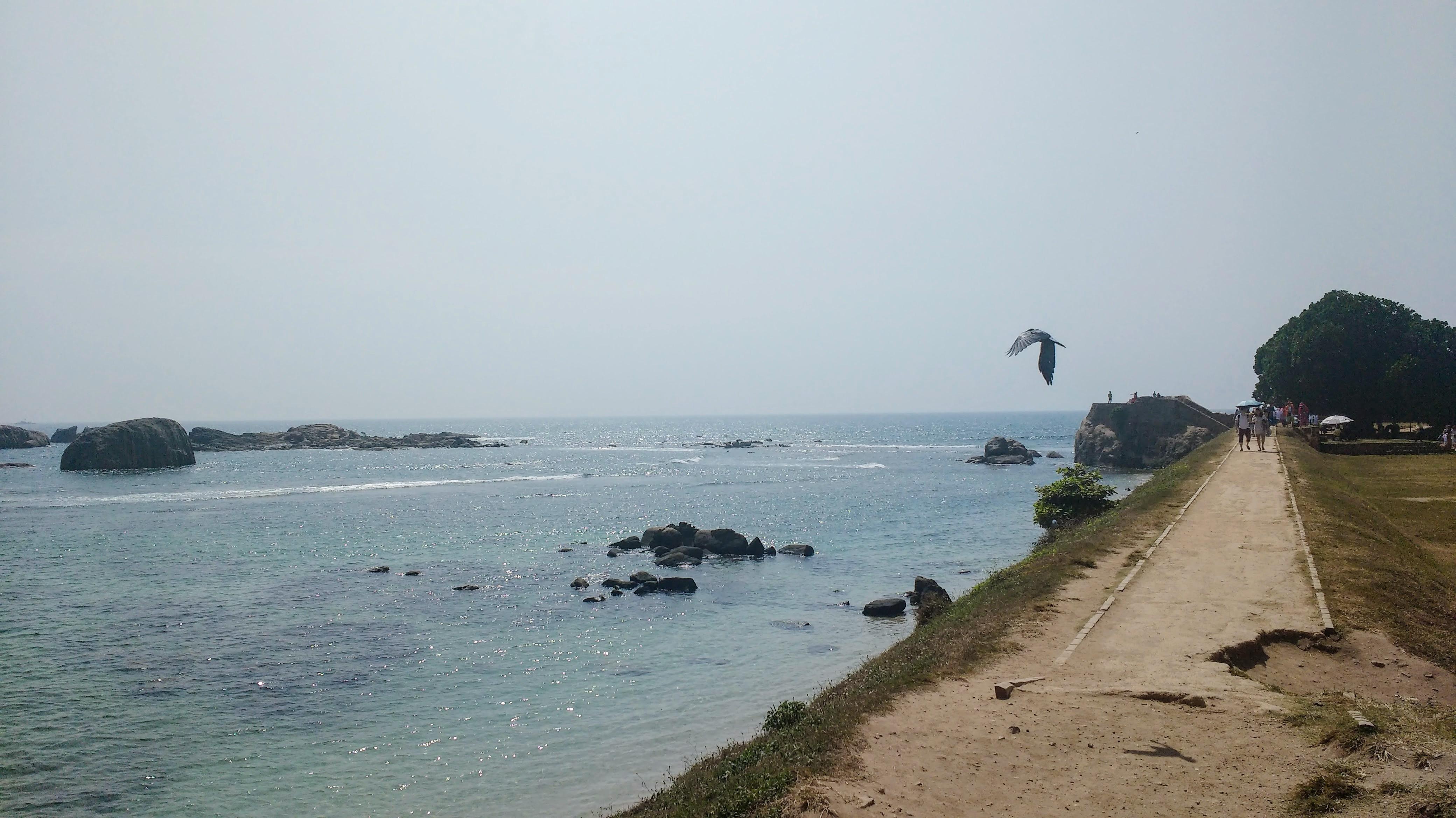 Galle Fort Sri Lanka Saltwater Yoga Rachel Lingham Seabird