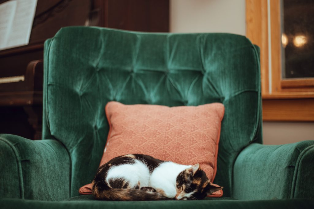 Cat Sleeping on Chair With Pillow