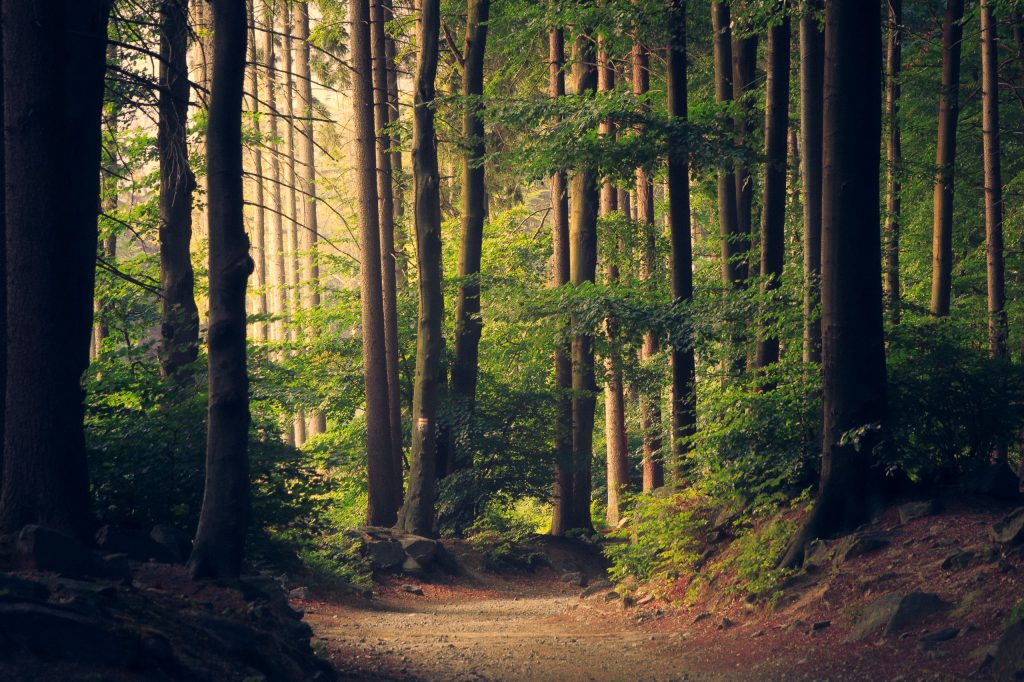 Walking in the woods - to boost immune system